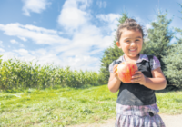 Four-year-old Belle Gordon holds a Honey Crisp apple in her hands at the BelleWood Acres farm on Saturday. BelleWood was one of 12 stops on the Whatcom County Farm Tour of Sustainable Connections.  (Ashley Hiruko/Ferndale Record)